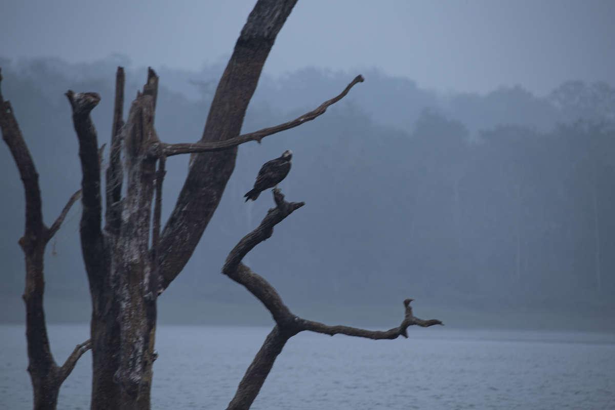 Bird of Kabini
